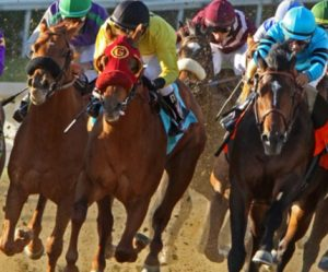 horse thoroughbred racing